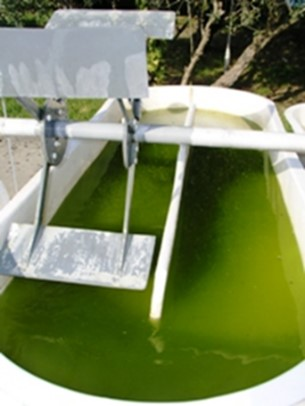 LNEG4 Raceway pond with paddlewheels at LNEG - for outdoor microalgae production